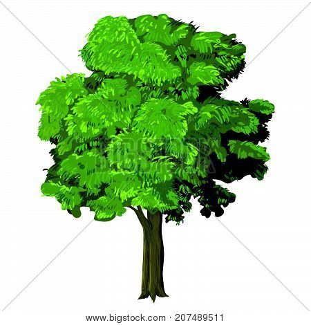 Illustration of green tree Natural plant green leaf tree. Nature environment green trees organic spring forest garden abstract wood park-vector illustration..
