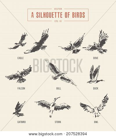 A silhouettes of birds. Eagle, dove, falcon gull duck catbird stork owl hand drawn vector illustration sketch