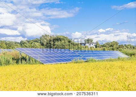 Solar power panels Photovoltaic modules for innovation green energy for life and rice field with blue sky background.