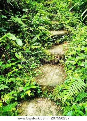stairs in the jungle. Valley Rain Forest Landscape. An overgrown concrete staircase in Bali