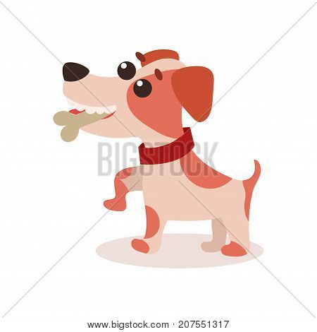 Jack russell terrier character eating bone, cute funny dog vector Illustration on a white background
