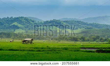 hut in farmland of people in countryside Thailand