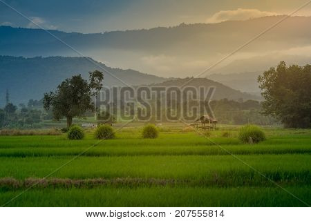 hut on agricultural fields in rural Thailand