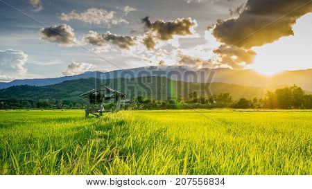 hut on agricultural fields in rural Thailand and light shines sunset.