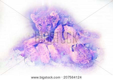 Two cute lion cubs playing together, graphic and marble effect