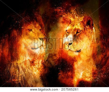 lion and lioness in the cosmic space. photos and graphic effect