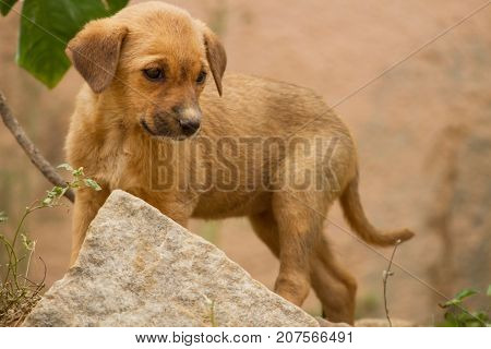 photo of a cute little feral puppy in India