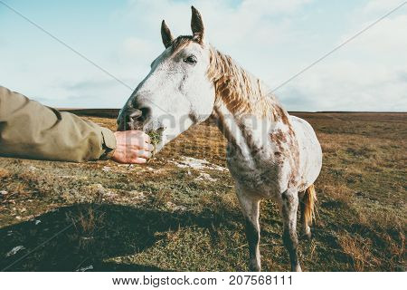 Man hand feeding white horse Lifestyle animal and people friendship Travel concept