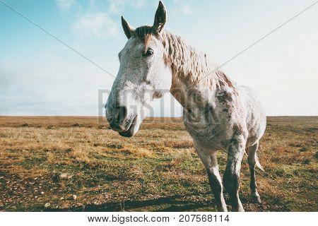 White Horse Animal pasture grazing field landscape on background