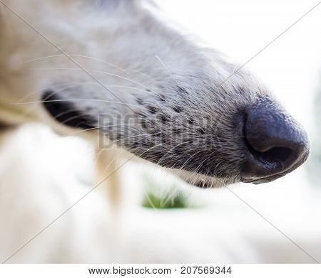 the mouth of a purebred dog in nature