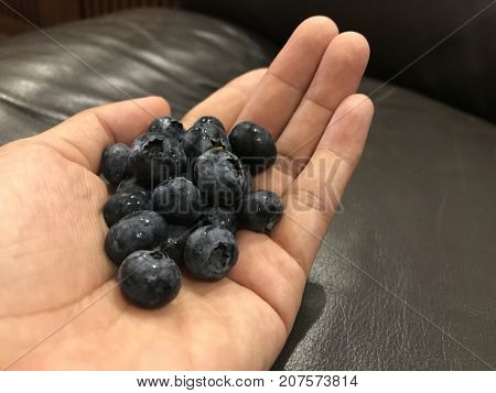 Bunch of juicy blueberries in a palm.
