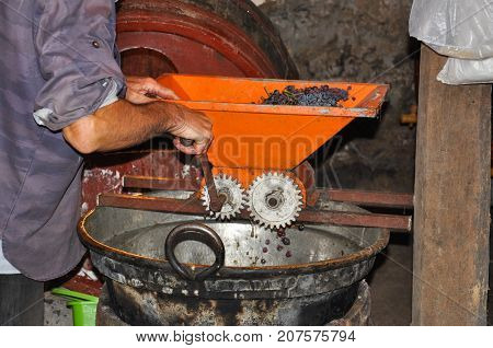 Man crushing freshly harvested grapes in vintage crusher. Preparing grape for wine in old basement