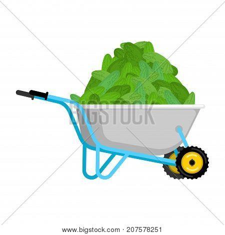 Wheelbarrow And Cucumber. Vegetables In Garden Trolley. Big Harvest Vector Illustration
