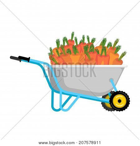 Wheelbarrow And Carrot. Vegetables In Garden Trolley. Big Harvest Vector Illustration