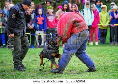 RUZOMBEROK SLOVAKIA - SEPTEMBER 9: Demonstration of police dog training on September 9 2017 in Ruzomberok