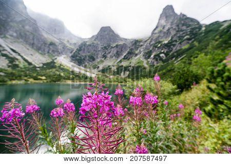 Violet Tatras and High Tatras mountains Slovakia
