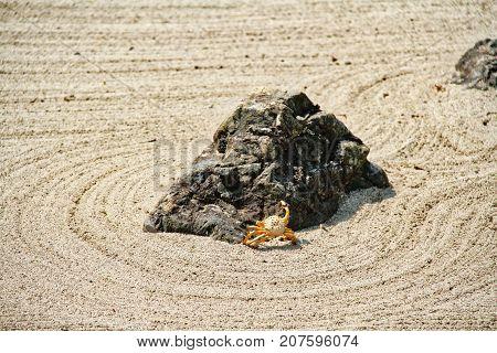 A crab climbing a rock in a Japanese zen garden