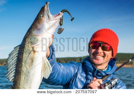 Happy angler holds Zander fish with lure