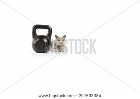 Portrait Of British Shorthair Cat And Weight On A White Background