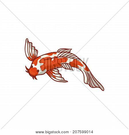 Japanese, Asian koi carp, goldfish, gold fish, top view flat style cartoon vector illustration isolated on white background. Japanese koi carp, golden fish drawing
