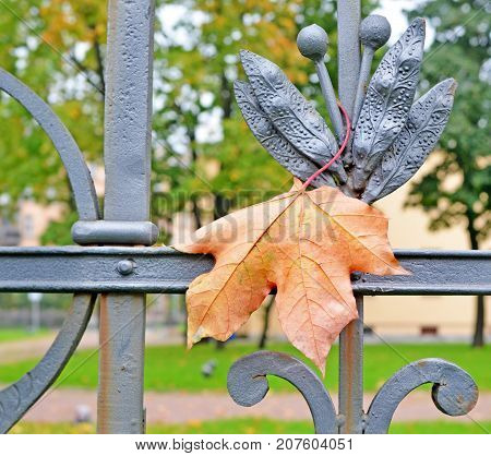 Fall. The yellow maple leaf falling caught on the metal fence pattern and hung on it. Background. Landscape.