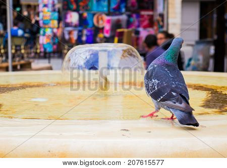 Fountain in the crowded area of ​​the city during the heat. The pigeon flew to drink water.
