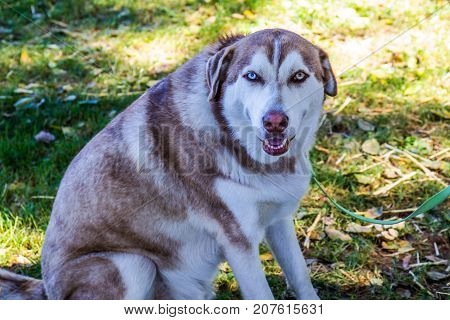 Timid Dog With Two Different Colored Eyes