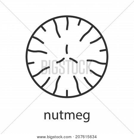Nutmeg linear icon. Thin line illustration. Mace spice. Contour symbol. Vector isolated outline drawing