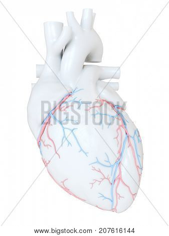 3d rendered medically accurate illustration of the coronary blood vessels