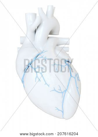 3d rendered medically accurate illustration of the coronary veins