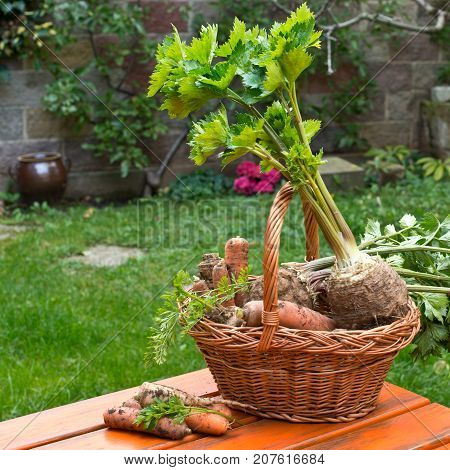 Parley Celery and Carrots in the Wicker Basket.
