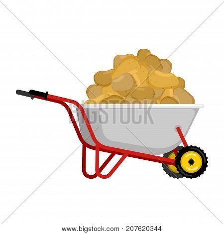 Wheelbarrow And Potato. Vegetables In Garden Trolley. Big Harvest Vector Illustration