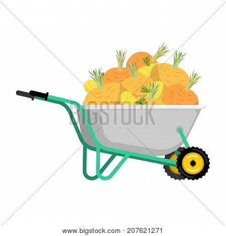 Wheelbarrow And Turnip. Vegetables In Garden Trolley. Big Harvest Vector Illustration