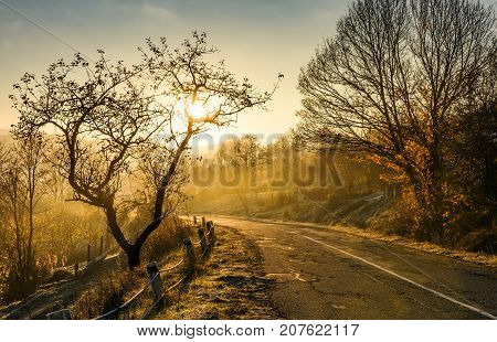 Country Road In Morning Fog