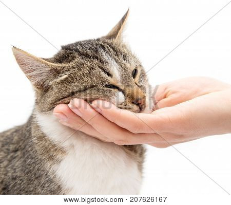 caress a cat on a white background