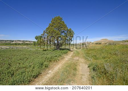 Old Wagon Road in the Prairie in Theodore Roosevelt National Park in North Dakota