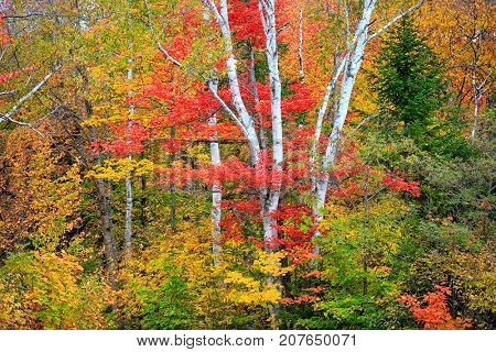 Bright color autumn trees in the park