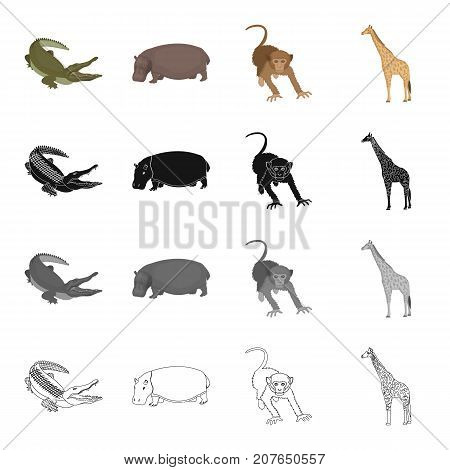 Wild animal, crocodile reptile, hippo, monkey, tall giraffe. Different kind of animal set collection icons in cartoon black monochrome outline style vector symbol stock illustration .
