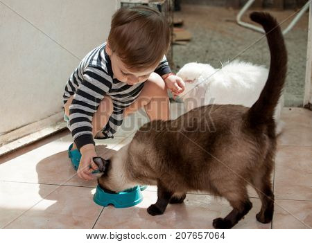 little boy is feeding a rabbit and a cat
