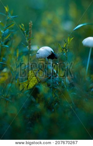 Mushrooms growing in a park with a blurred background