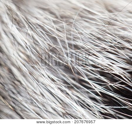 animal fur as background . Photo of abstract background