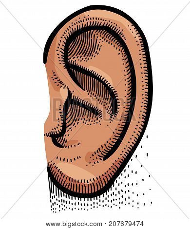Human ear cartoon hand drawn image. Original colorful artwork, comic childish style drawing.