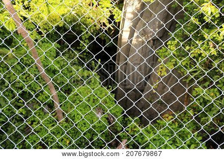 Steel mesh blocked trees rocks and natural. The cage and view of the nature.