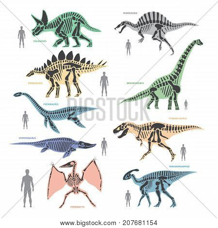 Dnosaurs seletons silhouettes bone animal and jurassic monster predator dino vector flat illustration. Reptile paleontology old bones.