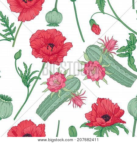 Seamless pattern and, background with red opium poppy and echinopsis. Stock line vector illustration.
