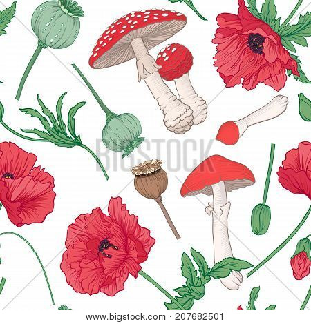Seamless pattern and, background with red opium poppy and amanita mushroom. Stock line vector illustration.