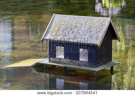 House - a fish feeder on the water and Koi Carps Fishes under it
