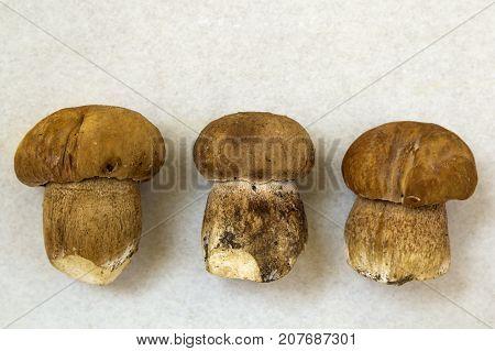 Three little brown mushrooms on light background