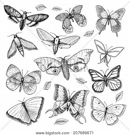 tattoo or boho t-shirt or scrapbooking design. Mystical esoteric symbol of freedom and travel. butterfly or Insect sketch. entomological collection engraved hand drawn in old sketch and vintage style