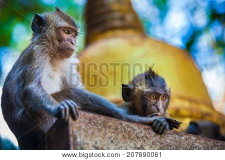 Monkeys observe the behavior of another monkey clan, before the attack. Thailand. Photo taken in the tropical forest